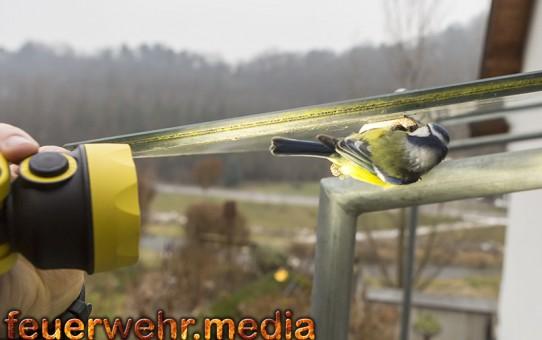 Feuerwehr befreit Vogel aus einem Eisenrohr (+Video)