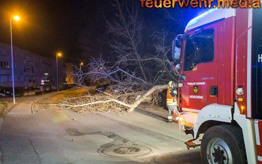 Umgestürzter Baum zerstört einen Pkw