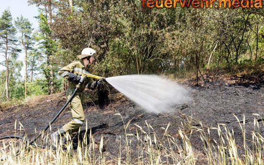 Waldbrand droht auf ein Feld überzugreifen - Drei Feuerwehren im Einsatz