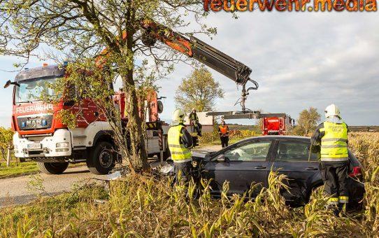 Pkw als Holzfäller unterwegs - Zwei Bäume in der Kremser Stratzinger Straße gerammt