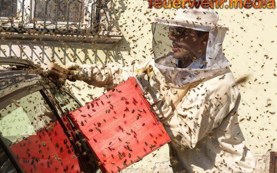 """Bienen """"belagerten"""" Fahrrad und Auto am Kremser Pfarrplatz"""