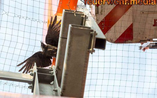 Vogel aus Gitternetz bei einem Einkaufszentrum befreit