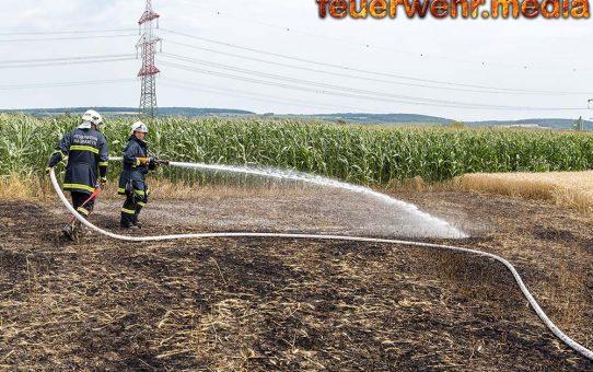 Feldbrand in Wagram erfordert den Einsatz von mehreren Feuerwehren