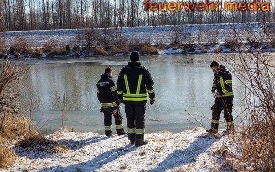 Vermeintlich eingefrorene Schwäne führen zu einem Feuerwehreinsatz