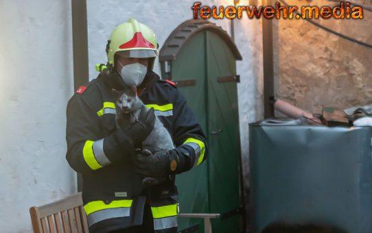 Katze aus verrauchter Wohnung gerettet