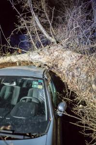 KS T1 Baum auf Pkw-13