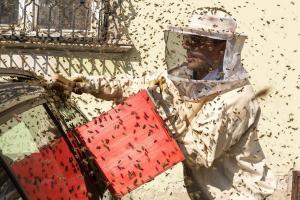 KS T1 Bienen 31052018-24