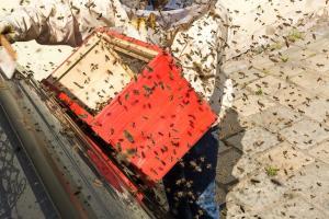 KS T1 Bienen 31052018-27