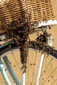 KS T1 Bienen 31052018-4