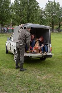 Rehbock steckt am Lerchenfelder Sportplatz in einem Zaun