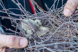 Feuerwehr rettet einen kleinen Vogel