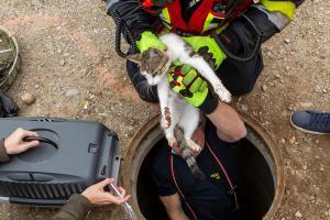 Tierrettung in Gneixendorf - Katze in einem Kanal gefangen