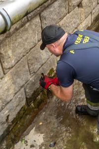 Entenkücken von der Feuerwehr gerettet